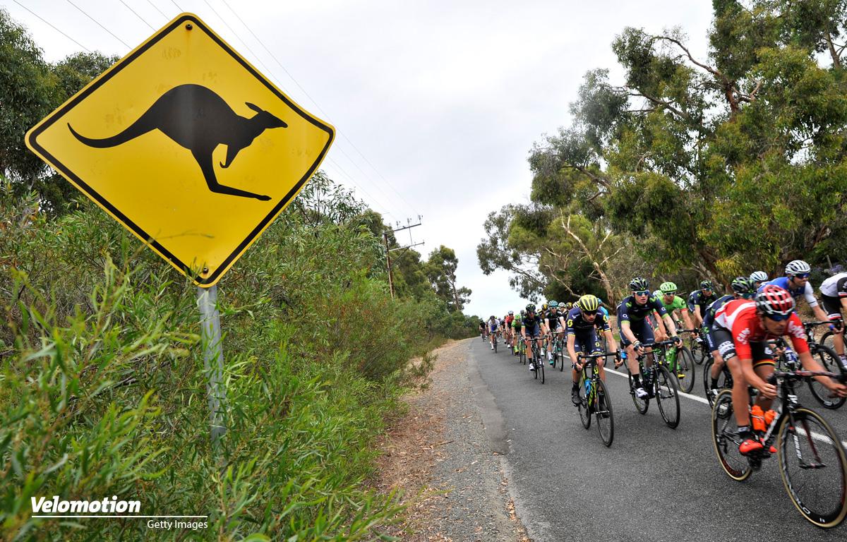 Känguru Radfahrerin Sturz